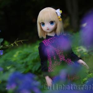 STAR LENS × 紫陽花