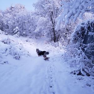 雪降ったけれど・・