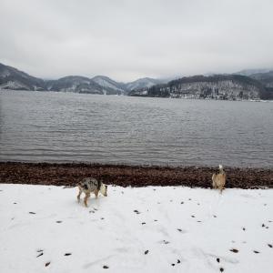曇り湖畔散歩