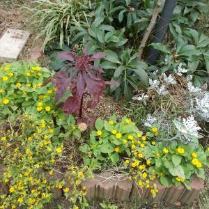 夏の花壇をリセット!