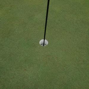 今年、ゴルフ7回目