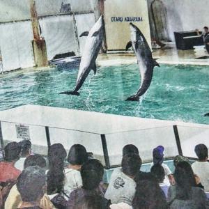 🐻2020年おたる水族館❕❕の取り組み❗