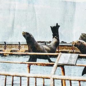 🐻《もっと泊マル、オタル。》キャンペーン第2弾4月1日より開催❕&おたる水族館が日帰りツアー開始❕