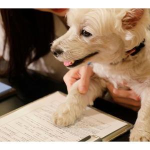 🐻飼い犬と一緒に宿泊プラン「ドッグフレンドリールーム」予約開始❕