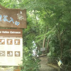 東京23区内唯一の存在である『等々力渓谷』はひっそりと存在するオアシス!気軽に散策できるのでオススメの観光スポットです。