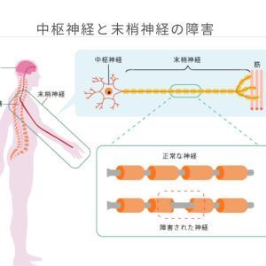 「CIDP(慢性炎症性脱髄性多発神経炎)」とは何かを軽く紹介。脊髄炎と共通点が多かったりするが診断は難しくはなさそうだが、どうやら自己抗体によるタイプの違いが多いらしい?