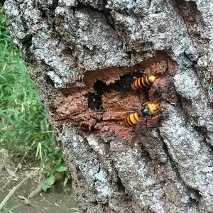九月の散歩記録と脊髄炎の経過について。感覚がもうヤバいという話と秋の散歩はスズメバチに要注意!