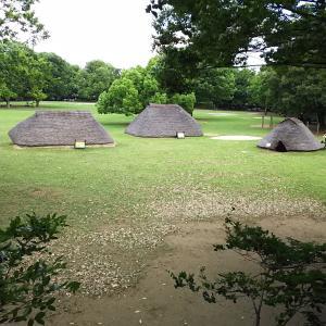 梅雨の晴れ間にお散歩いかが? 水子貝塚公園と難波田城公園