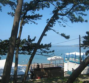 ■2020神奈川県海水浴場御三家&葉山町、1日開設中止を決定