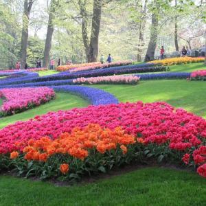 オランダのチューリップ!キューケンホフ公園の見どころ紹介