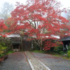 紅葉2019!  ~神蔵寺~