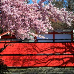 2020 桜!    ~車折神社~