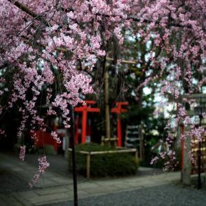 2020 桜!    ~水火天満宮~