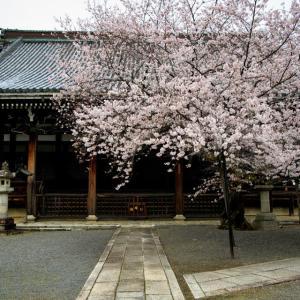 2020 桜!    ~本法寺~