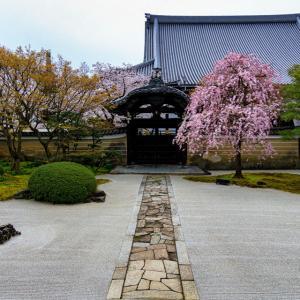 2020 桜!    ~妙顕寺~