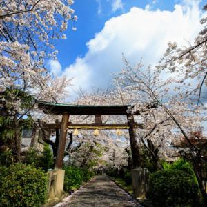 2020 桜!    ~蔵王堂光福寺~