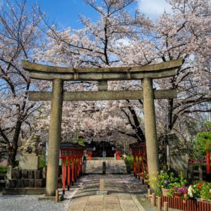 2020 桜!    ~六孫王神社~
