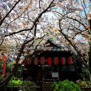 2020 桜!    ~雨宝院~
