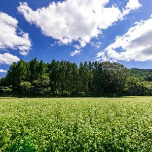 蕎麦と青空と雲!   ~犬甘野~