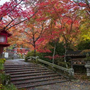 紅葉2020!  ~亀岡 鍬山神社~
