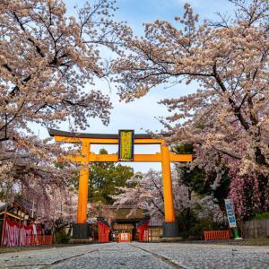 桜 2021 平野神社!