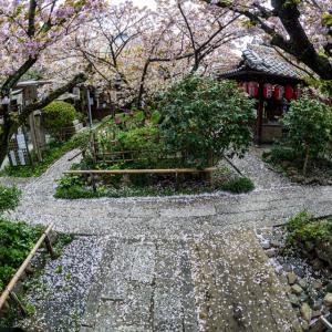 桜 2021 雨宝院!