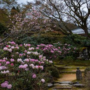 春の花たち!  ~実光院~