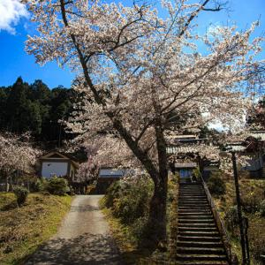 桜 2019!  ~福徳寺~