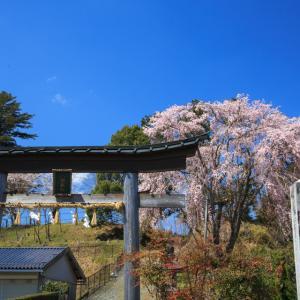 桜 2019!  ~京北 八幡宮社~