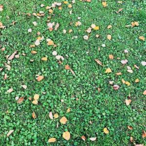 秋のアウター問題