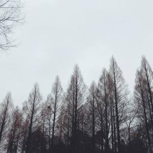 冬の公園散歩