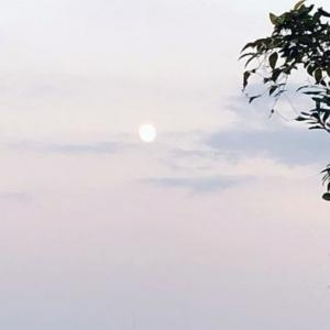 十三夜の月と、絵手紙と、うさぎ