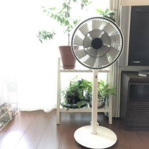 【夏のリビング】バルミューダの扇風機
