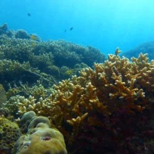 フィリピン「シニアライフ」ダイビング。
