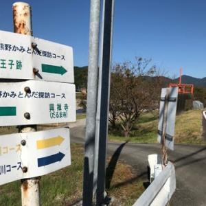 秋を満喫(一ノ瀬コスモス畑、達磨寺アサギマダラ蝶)