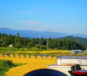 怒涛の秋 収穫
