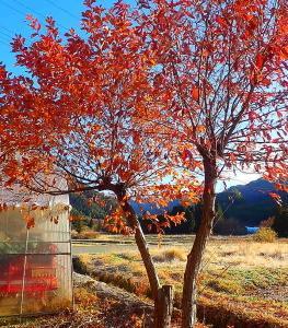 葉っぱがパラパラと落っこちる朝