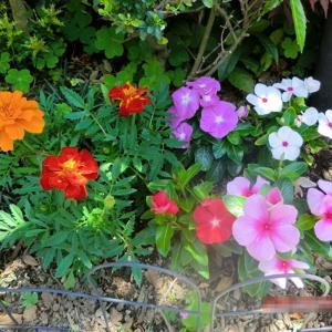 街角に咲く花📷街角ぶらり旅05-27-2
