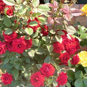 街角に咲く花📷街角ぶらり旅06-02