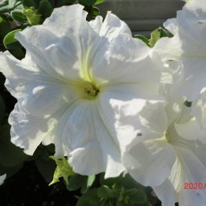 街角に咲く花📷街角ぶらり旅06-02-2