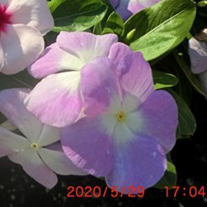 街角に咲く花📷街角ぶらり旅06-06