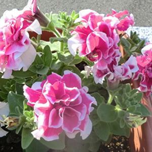 街角に咲く花📷街角ぶらり旅06-06-2