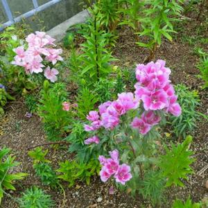 街角に咲く花📷街角ぶらり旅06-17