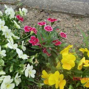 街角に咲く花📷街角ぶらり旅06-21