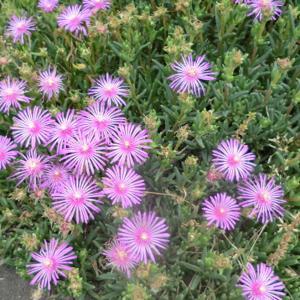 街角に咲く花📷街角ぶらり旅06-22