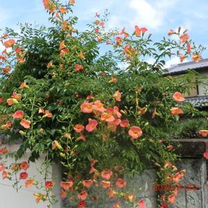 街角に咲く花📷街角ぶらり旅06-24