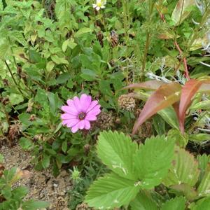 街角に咲く花📷街角ぶらり旅06-25
