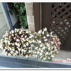 街角に咲く花📷街角ぶらり旅07-04