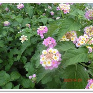 街角に咲く花📷街角ぶらり旅07-08