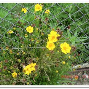 街角に咲く花📷街角ぶらり旅07-10